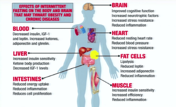 benefits-of-intermittent-fasting-