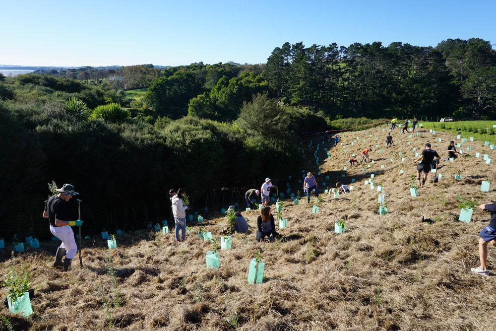 Planting Trees Auckland Mangemangeroa
