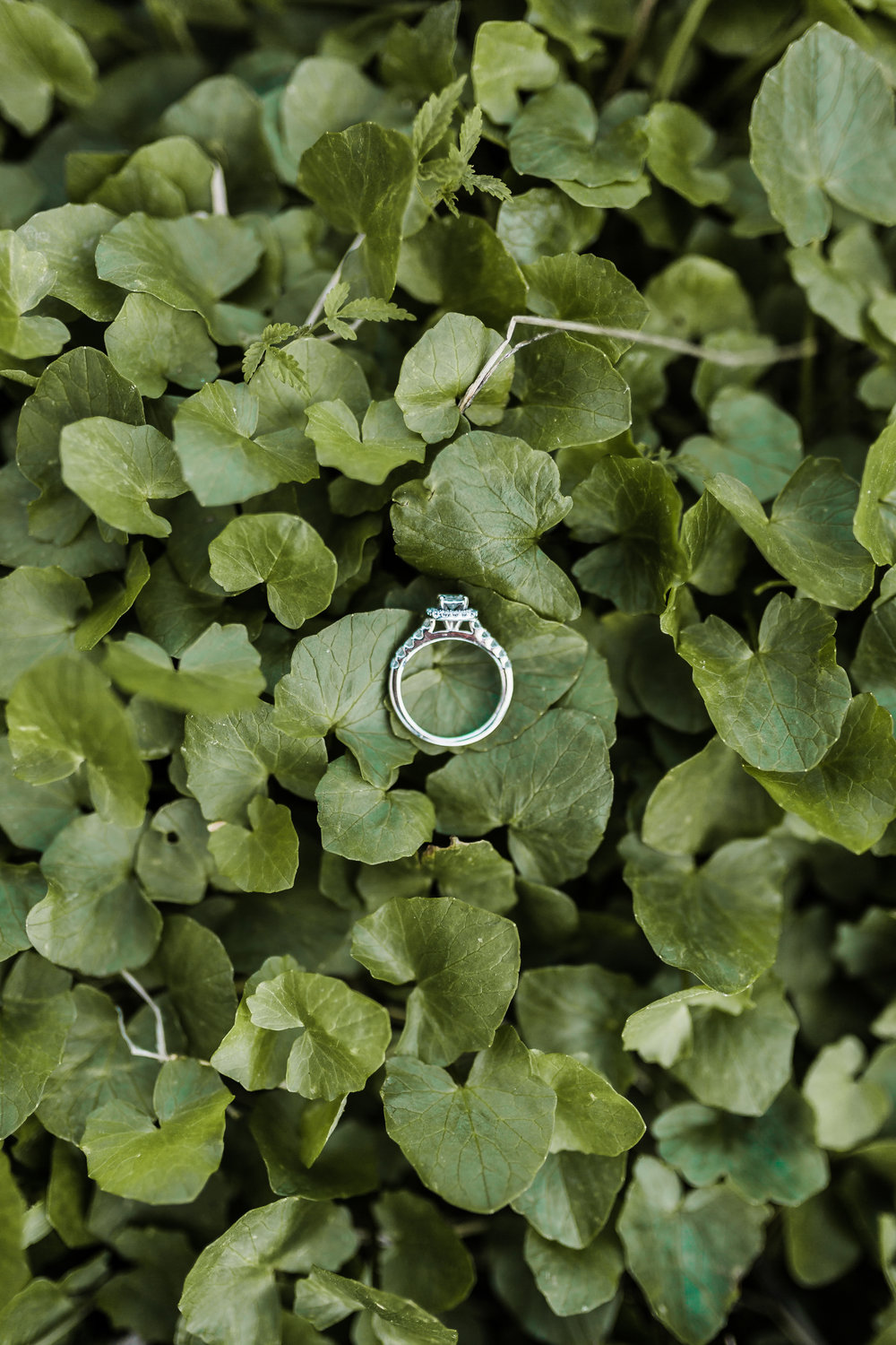 engagement ring resting on clovers during boho maryland engagement session