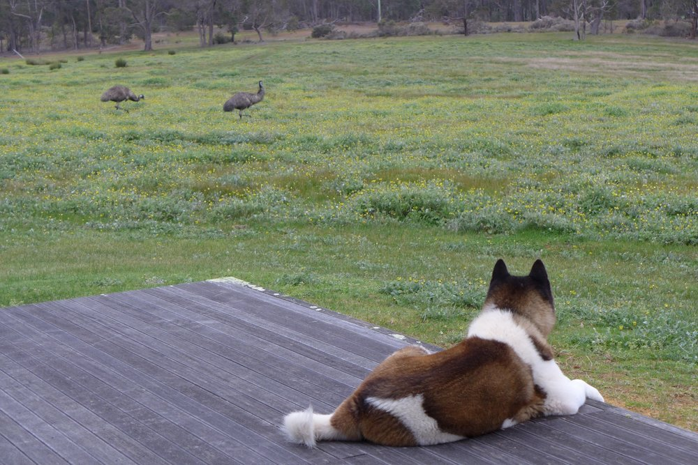 ROSA GLEN EMUS.jpg