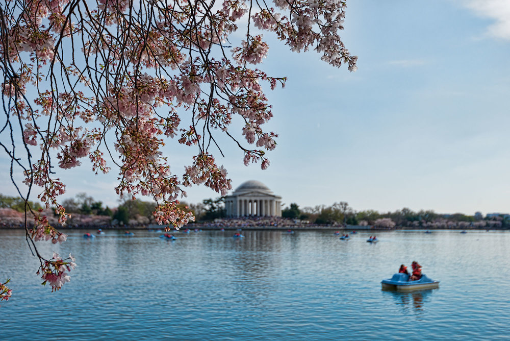 A view of Jefferson Memorial from Tidal Basin