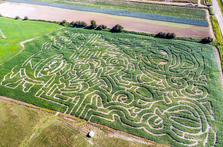 ROADSIDE-Harvest-Social-is-bringing-a-craft-beer-corn-maze-to-Abbotsford-this-year-ROADSIDE-Harvest-Social.jpg