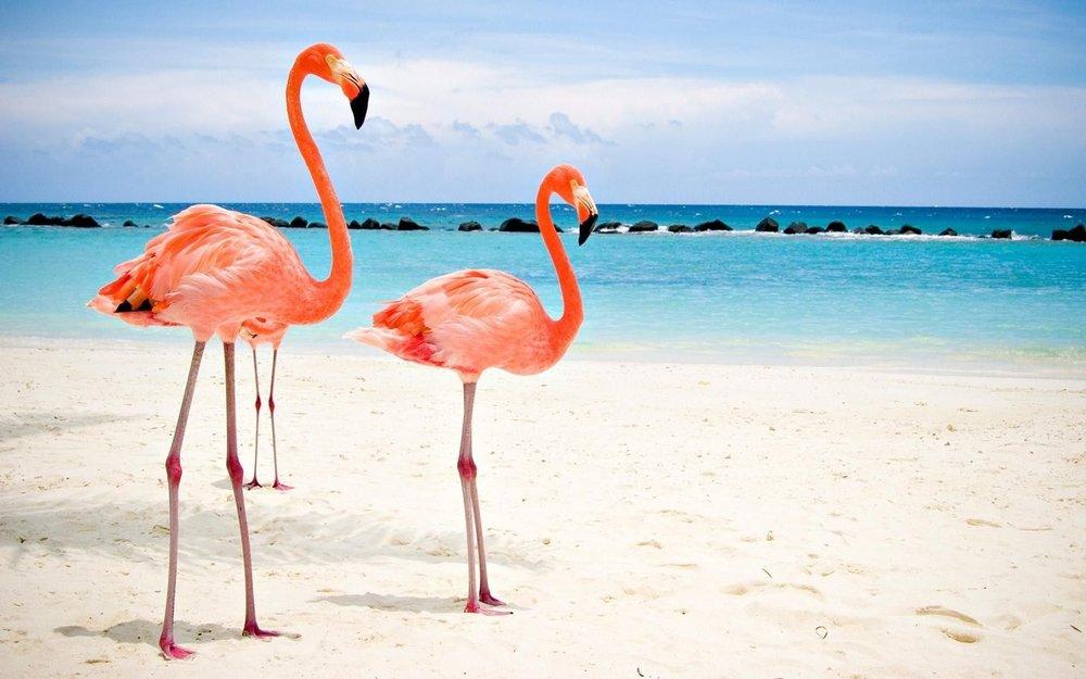 flamingo-beach-aruba.jpg