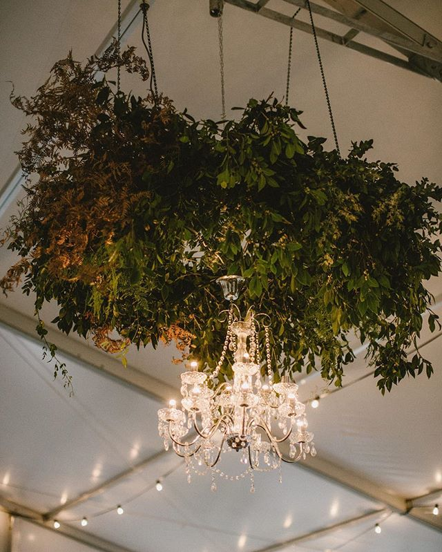 • THE FOLIAGE HALO • Textured + wild captured by the epic @sarahtonkinphotography