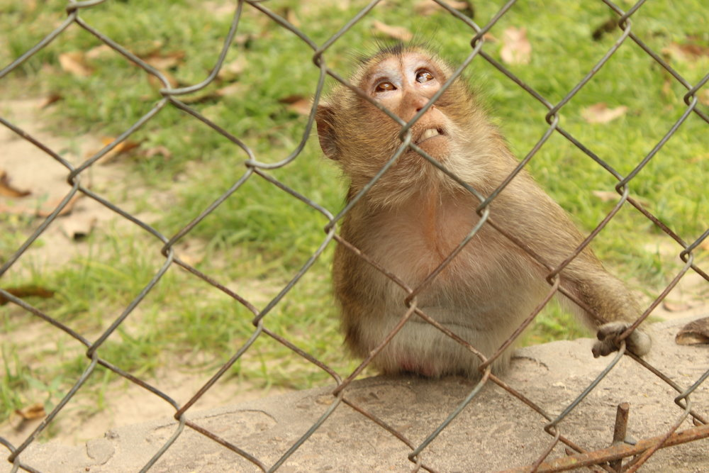 Bandit was a macaque born with only three fingers on her only arm. Nevertheless, she was the head honcho of her enclosure!