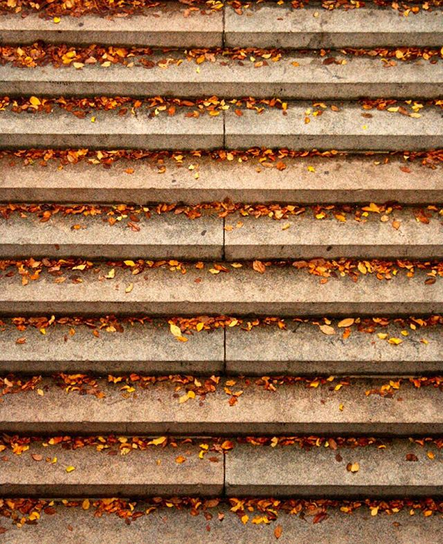 Leaves on the steps to Bethesda Terrace #centralparkmoments #NYC #iloveny #instagramnyc #seeyourcity