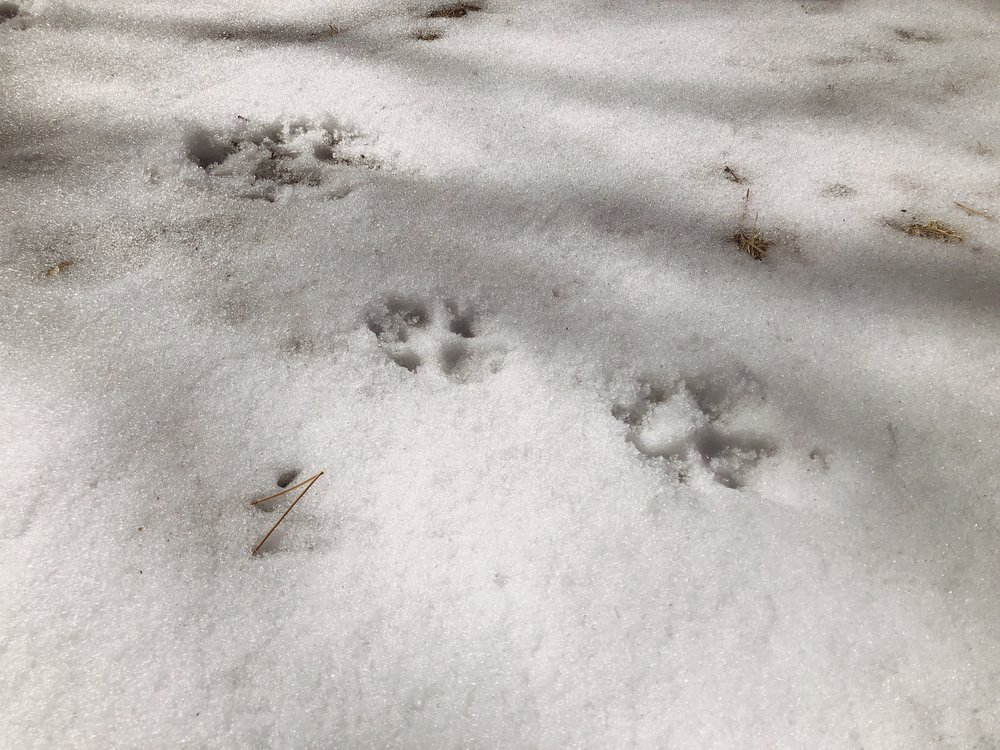 "I call this, ""pawprints on snow, the medium"""