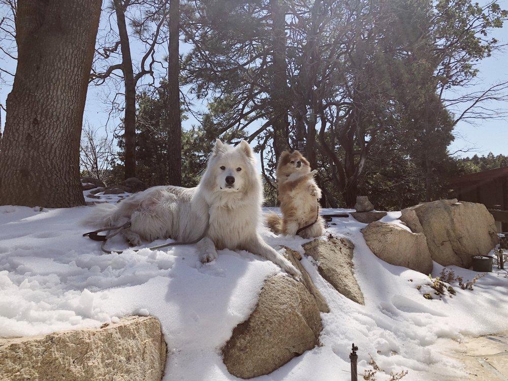 02.28.18_Lake Arrowhead_Samoyed Sumo_Ali Heiss_4.JPG
