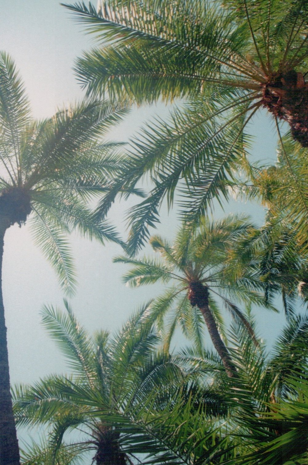 Los Angeles-Palm Trees-Film Photography-Stay Boutique Live-BLLA-Boutique Community