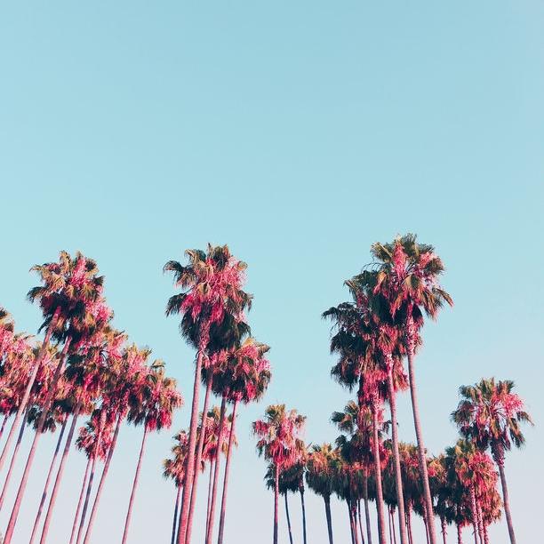 Stocksy Palm Trees Vertical.jpg