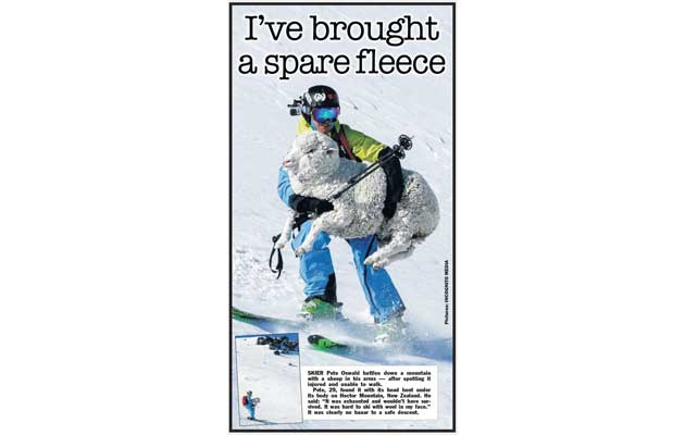 The Sun Newspaper - Sheep Rescue