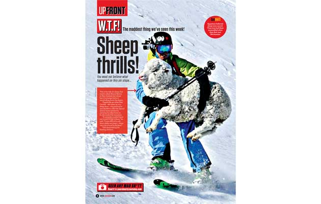 Zoo Magazine - W.T.F Sheep Rescue