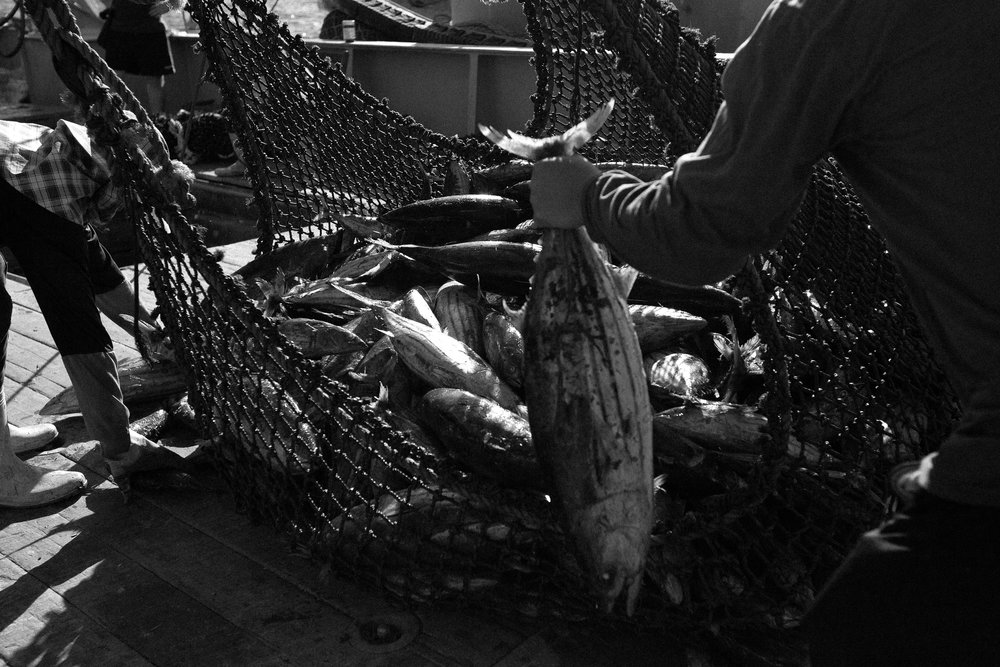 Skipjack tuna are loaded into smaller nets on the purse seiner to be craned into the belly of the mother ship moored alongside. The revenue from tuna alone accounts for more than half of Kiribati's total national revenue.