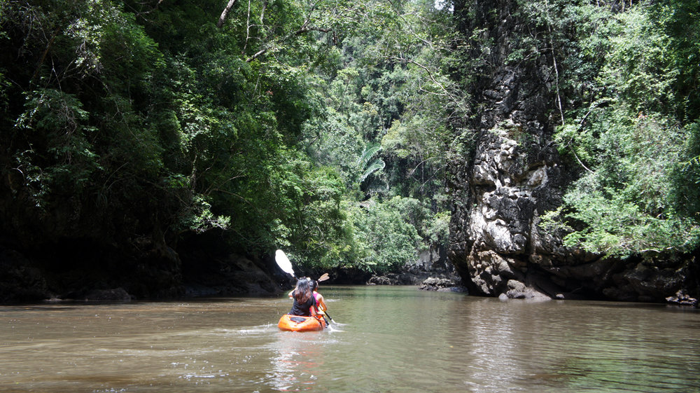 Mangrove - Venturing Into the Wild.jpg