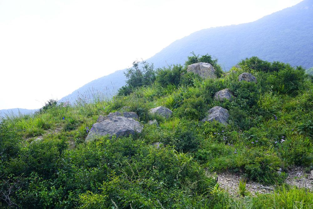 Mountain Wildlowers