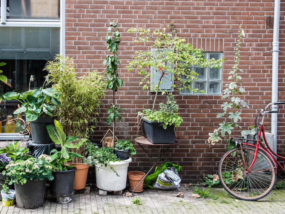 lilywanderlust-amsterdam-summer-gardens-7.jpg