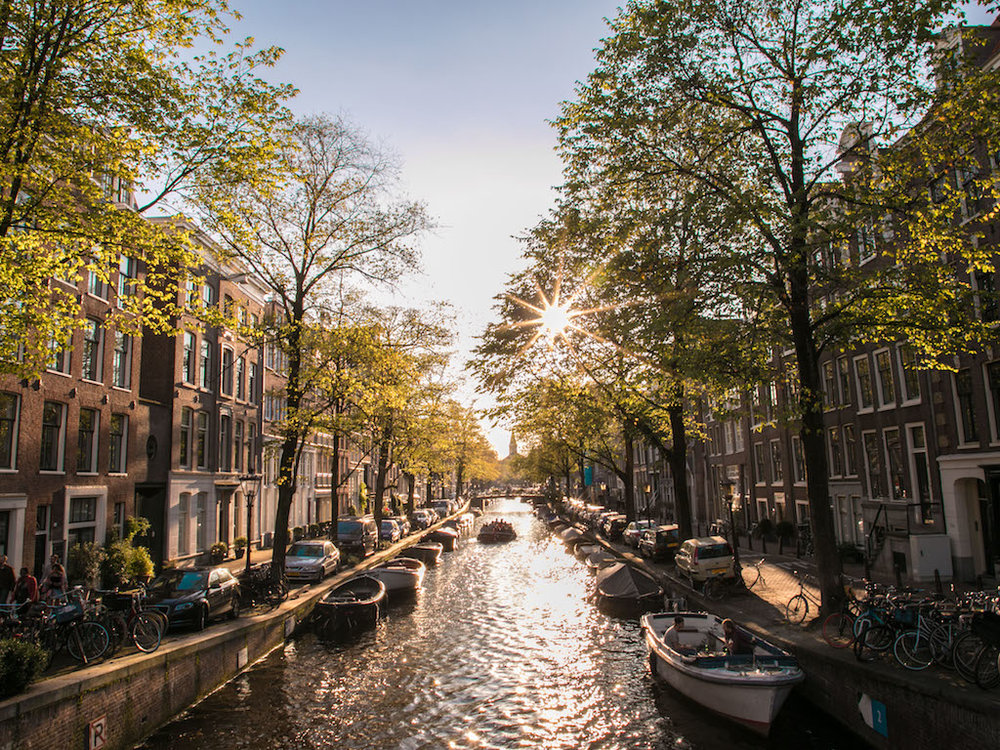 Amsterdam Autumn Sunflair 2017 by Lily Heaton-9.jpg