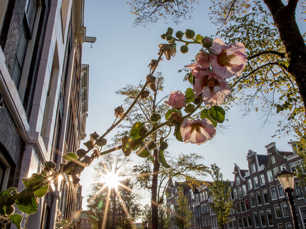 Amsterdam Autumn Sunflair 2017 by Lily Heaton-17.jpg