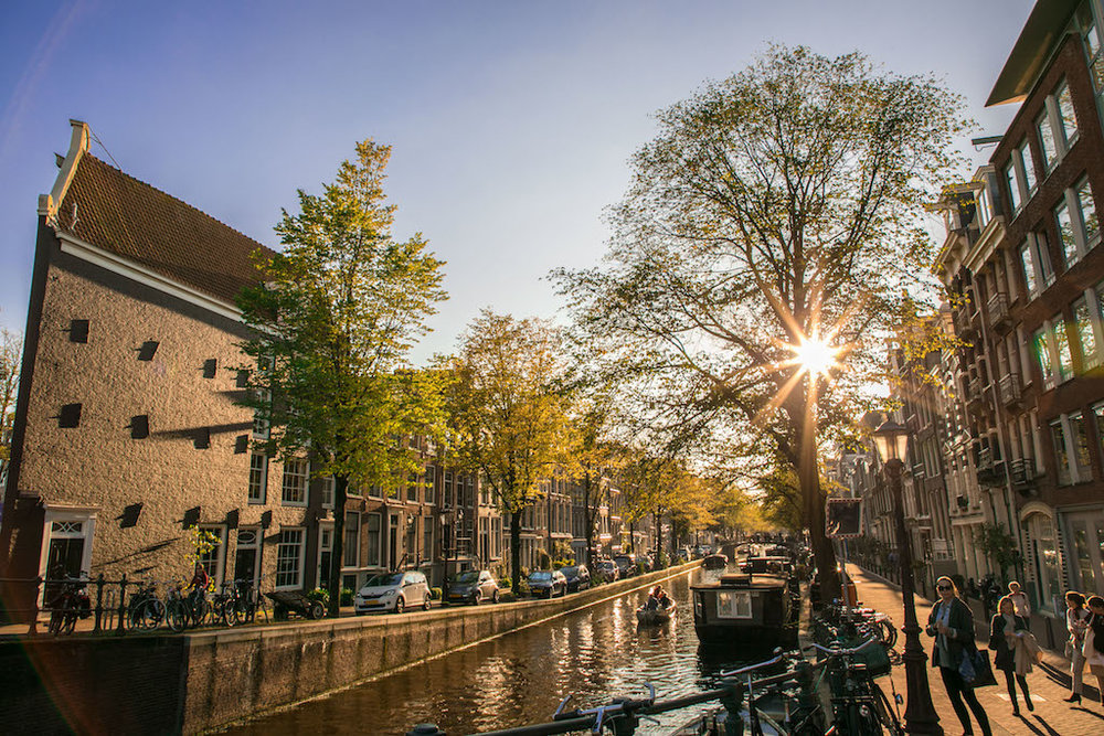Amsterdam Autumn Sunflair 2017 by Lily Heaton-7.jpg