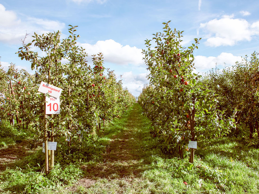 Apple Orchard 2017-16.jpg