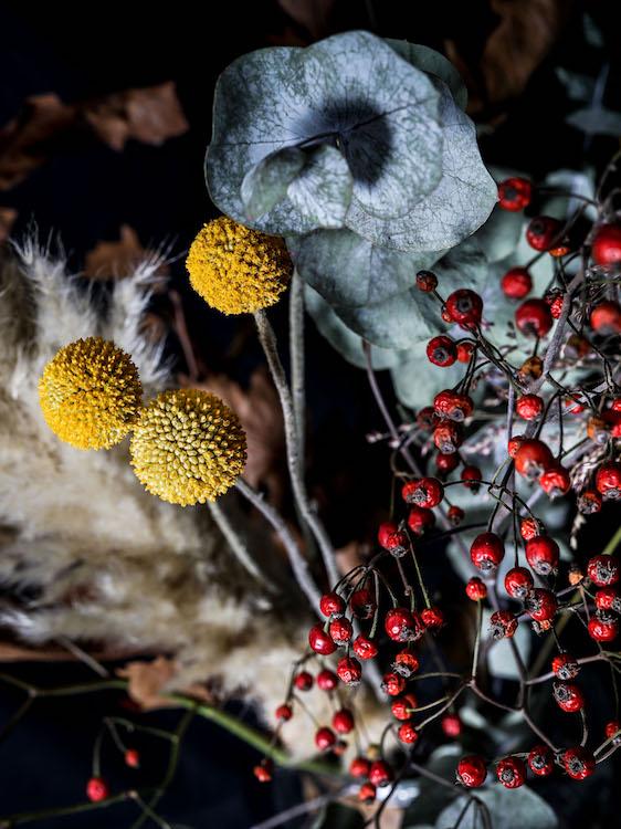 LilyWanderlust-Autumn-Blooms-4.jpg