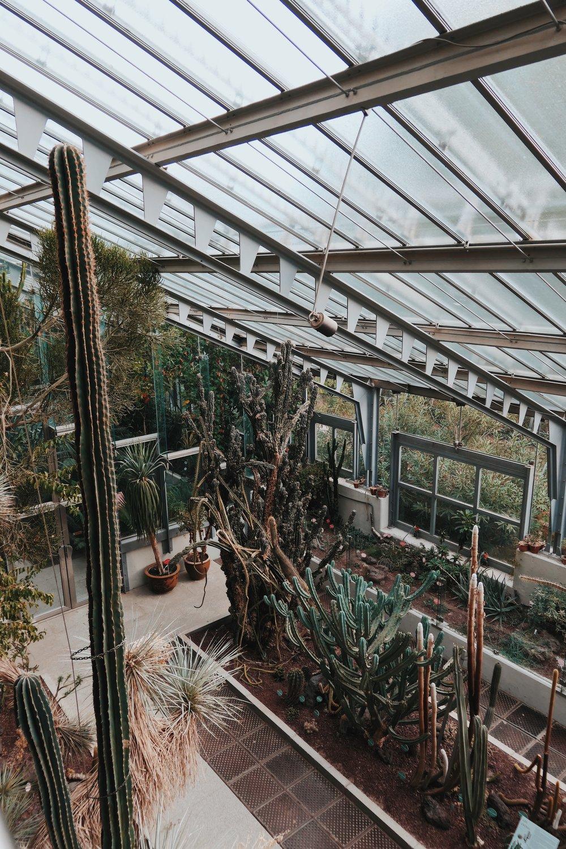 Ботаническата градина с най-виоките кактуси, които съм виждала. Входът е 6 евро.
