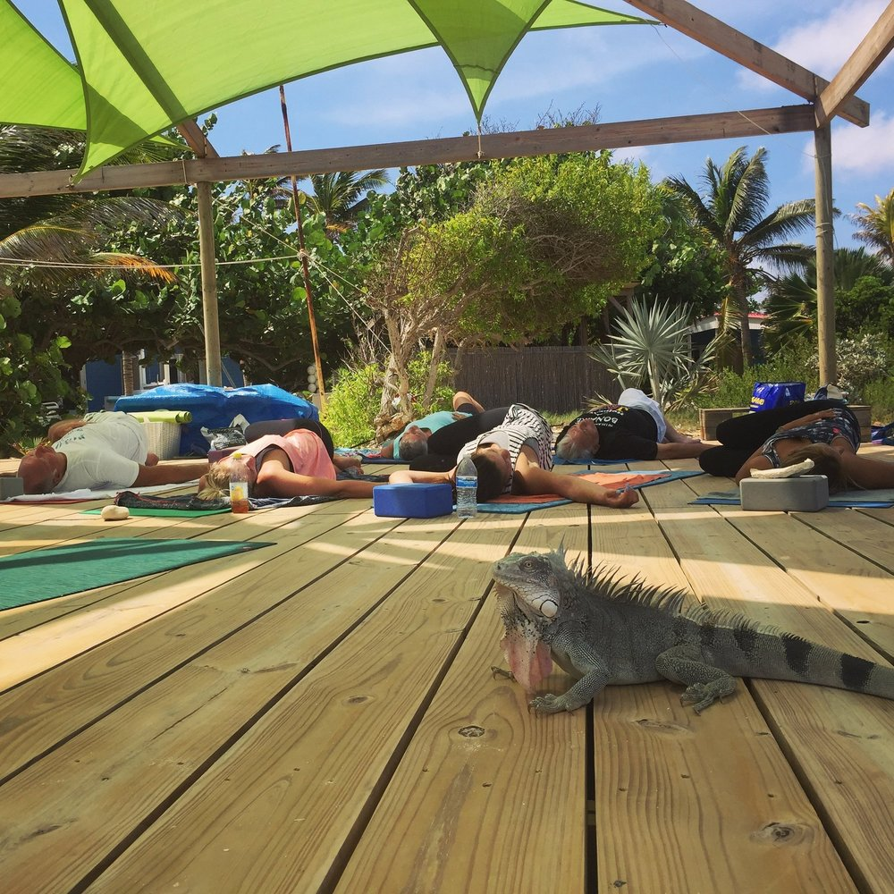 Iguana joins in for yoga