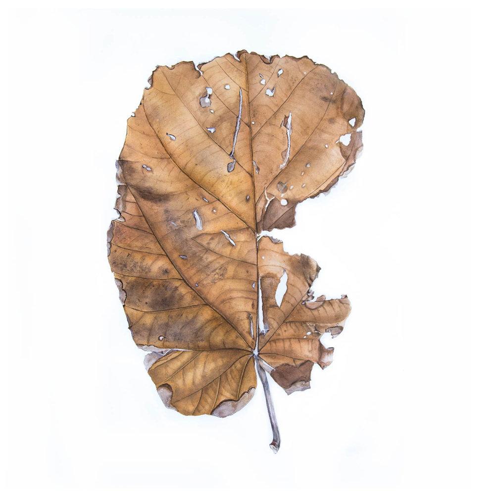 Leaf AFlo 13.jpg