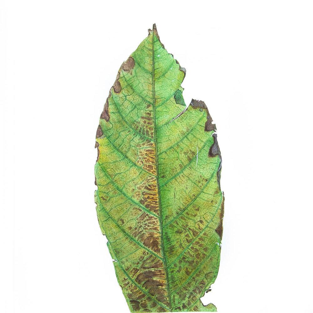 Leaf AFlo 10-2.jpg