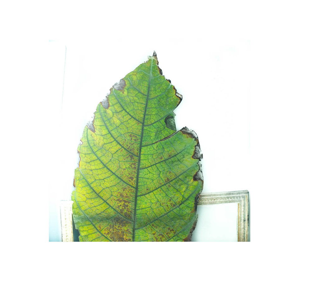 green leaf 9.jpg