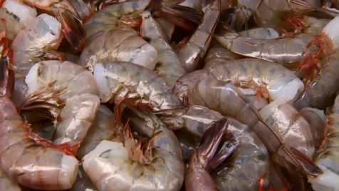 fresh-gulf-shrimp