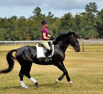 Marissa Fish of George Sink, P.A. Injury Lawyers   Riding Acorino, my trainer's Holsteiner stallion. I keep fit and healthy by riding horses. I've been riding for over 20 years. I compete in the stadium jumpers and also train in lower level dressage.