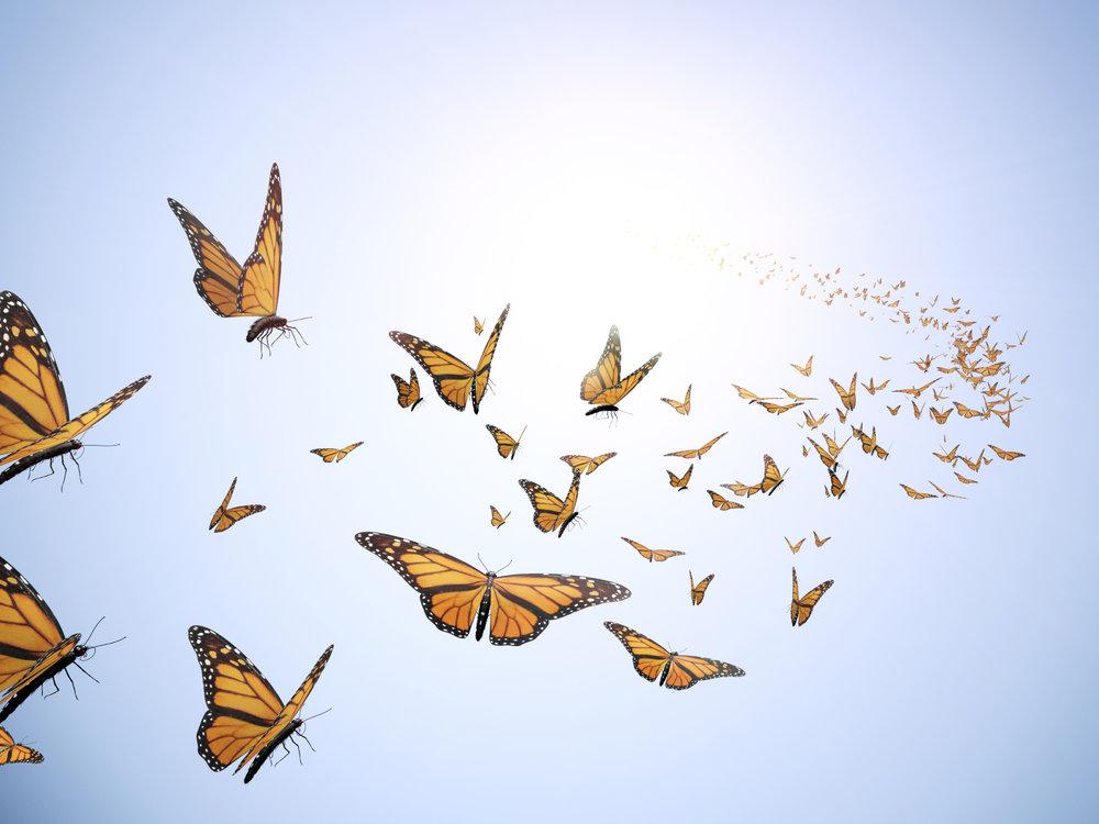 Butterfly Release.jpg