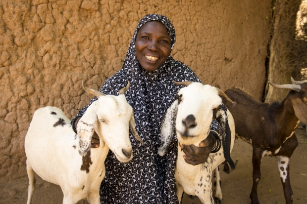 goats in africa.jpg