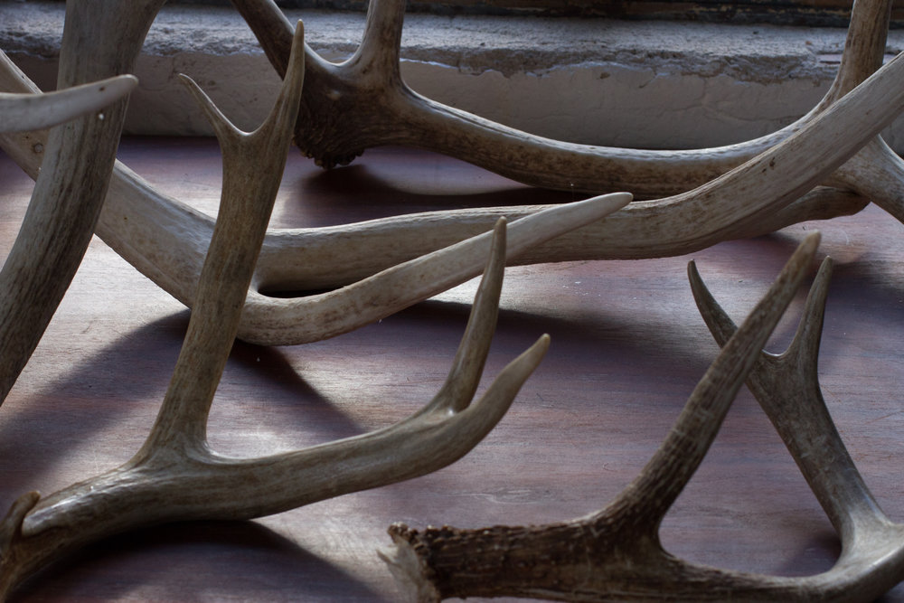 antlers on table (1 of 1).jpg