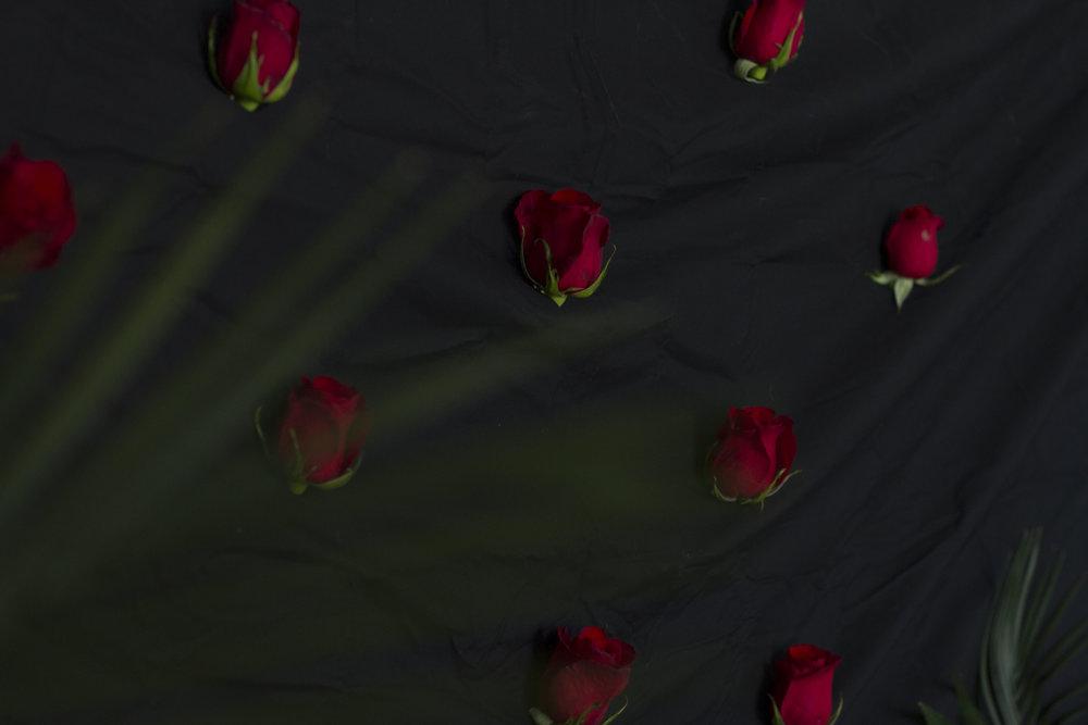 roses in black.JPG