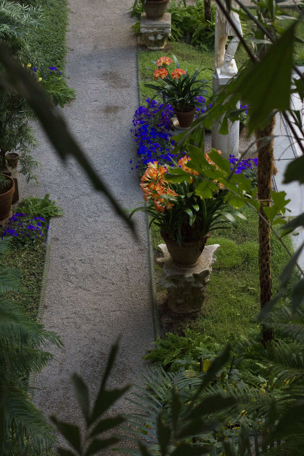courtyard plants and path .jpg