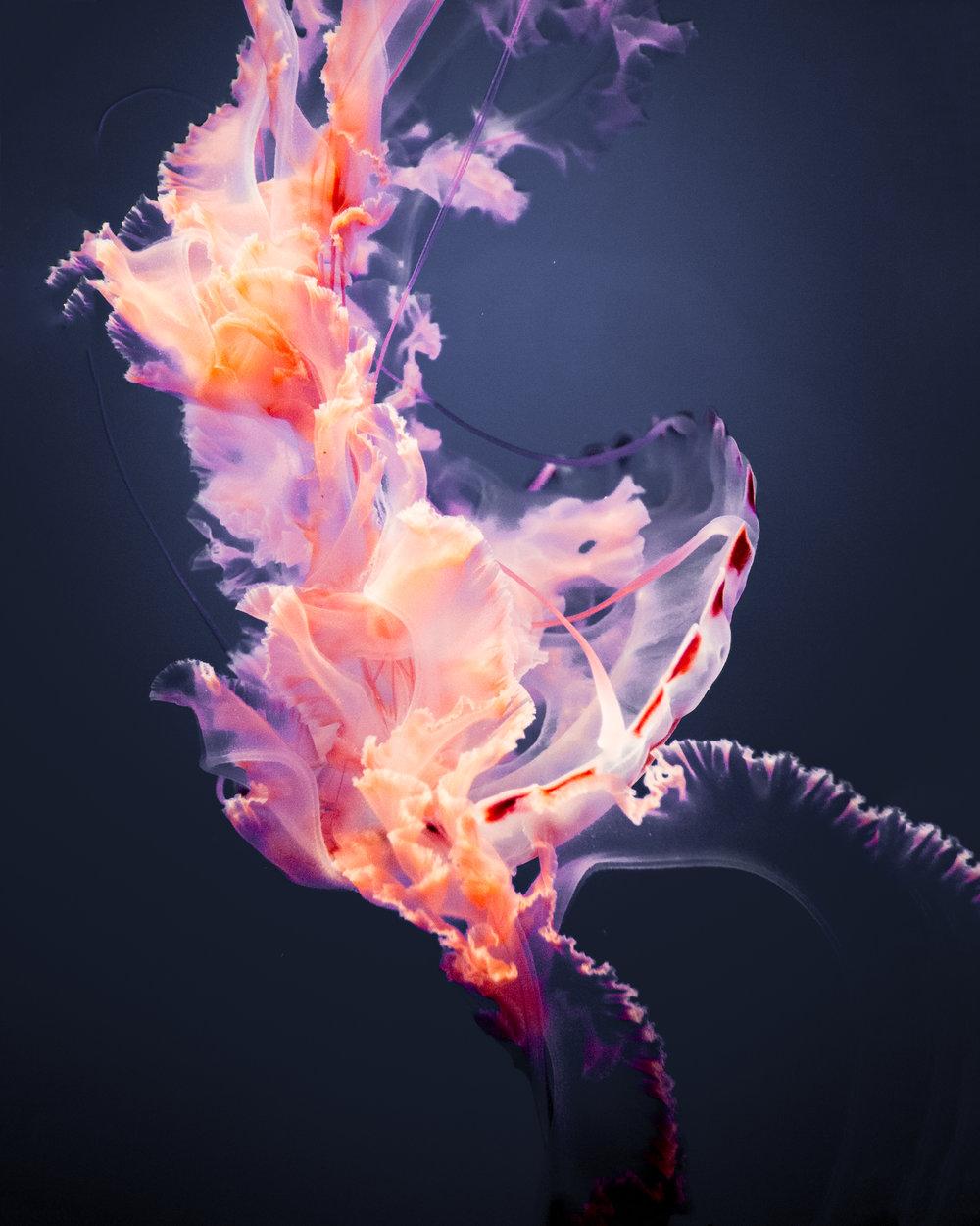 Jelly 1.jpg