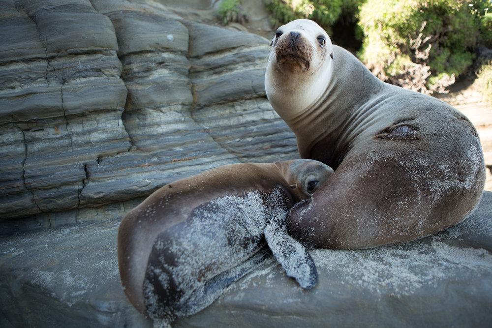 Seals delight.jpg