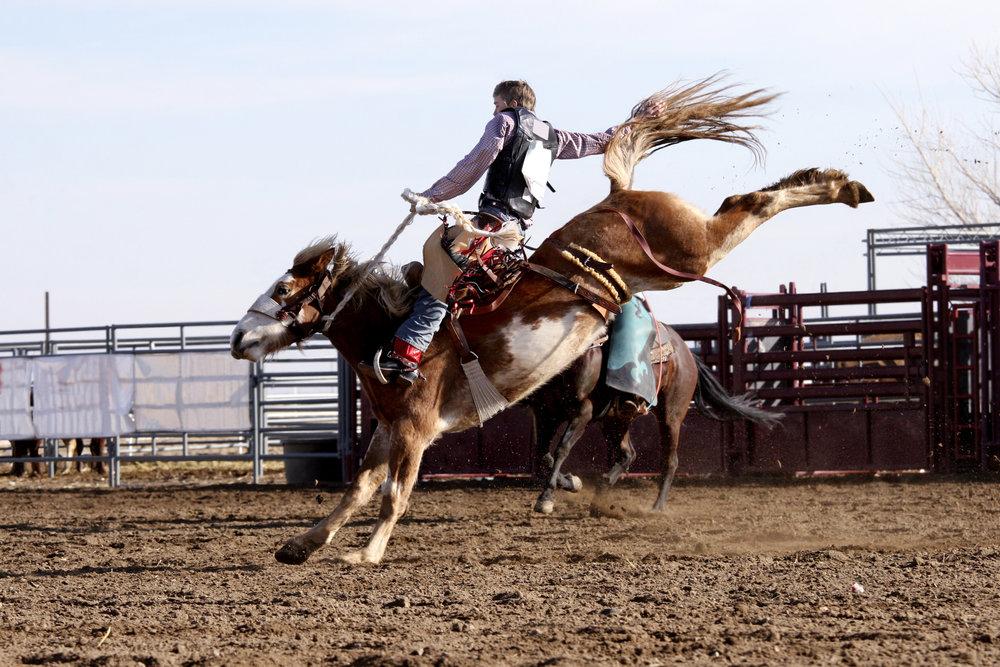 ESD 105_Rodeo.jpg