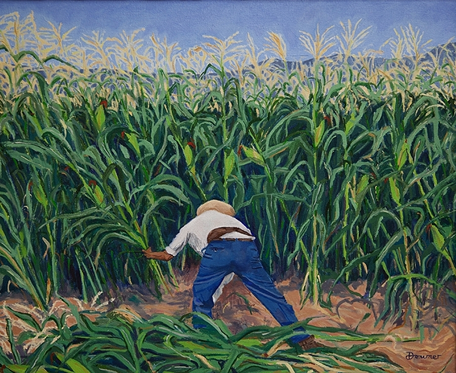 The Corn Harvest