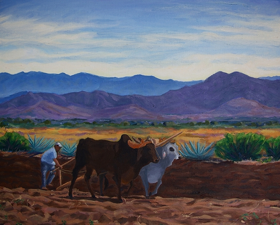 Bulls with Purple Mountains