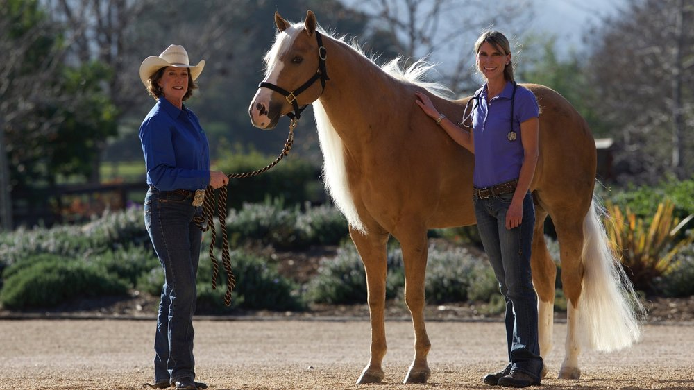 OUR TEAM - Our dedicated team of veterinarians, technicians, rehabilitation specialists and support staff offers extensive experience and expertise. They provide dedicated care and deliver the latest in advanced veterinary medicine to help return your horse to health and soundness.