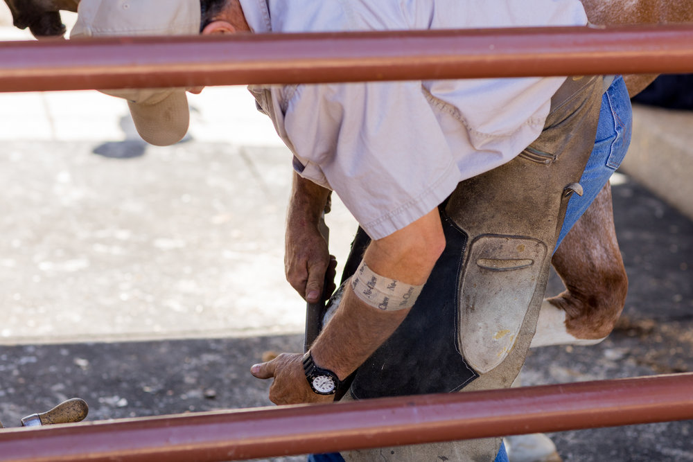Specialty farrier service are offered on-site.