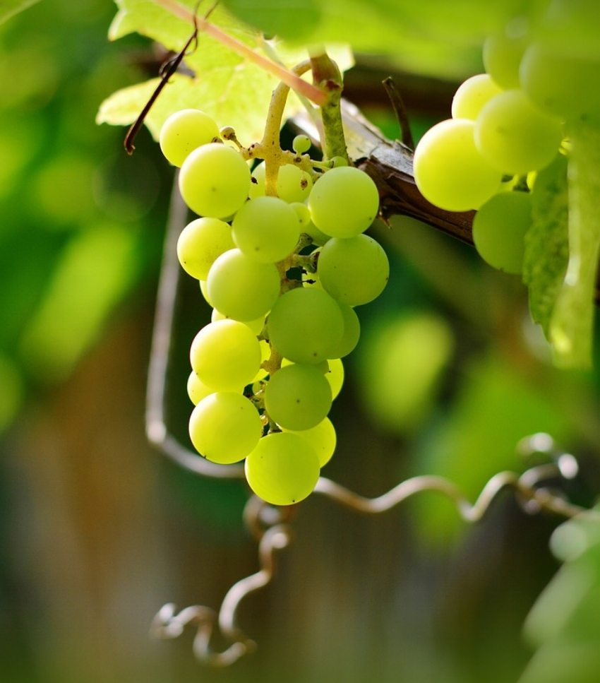 Don't forget to pick up your grapes for the big night!