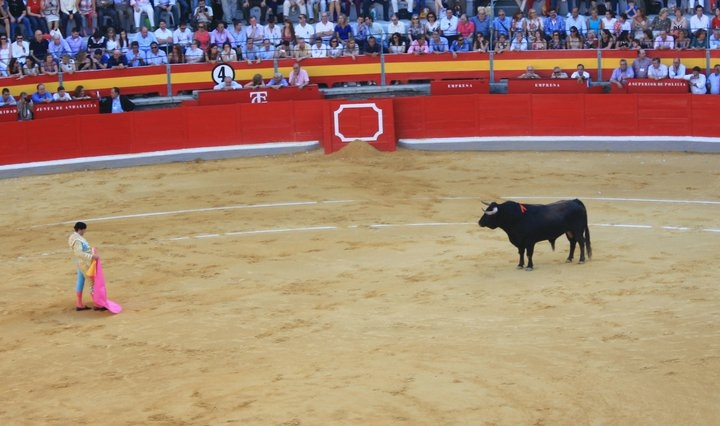 Bullfight. Granada. 2011 Photo Source: Ali Bonnell