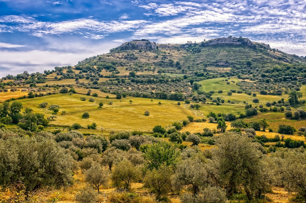 Olive tree landscape. Photo source: Tama66 on Pixabay.com