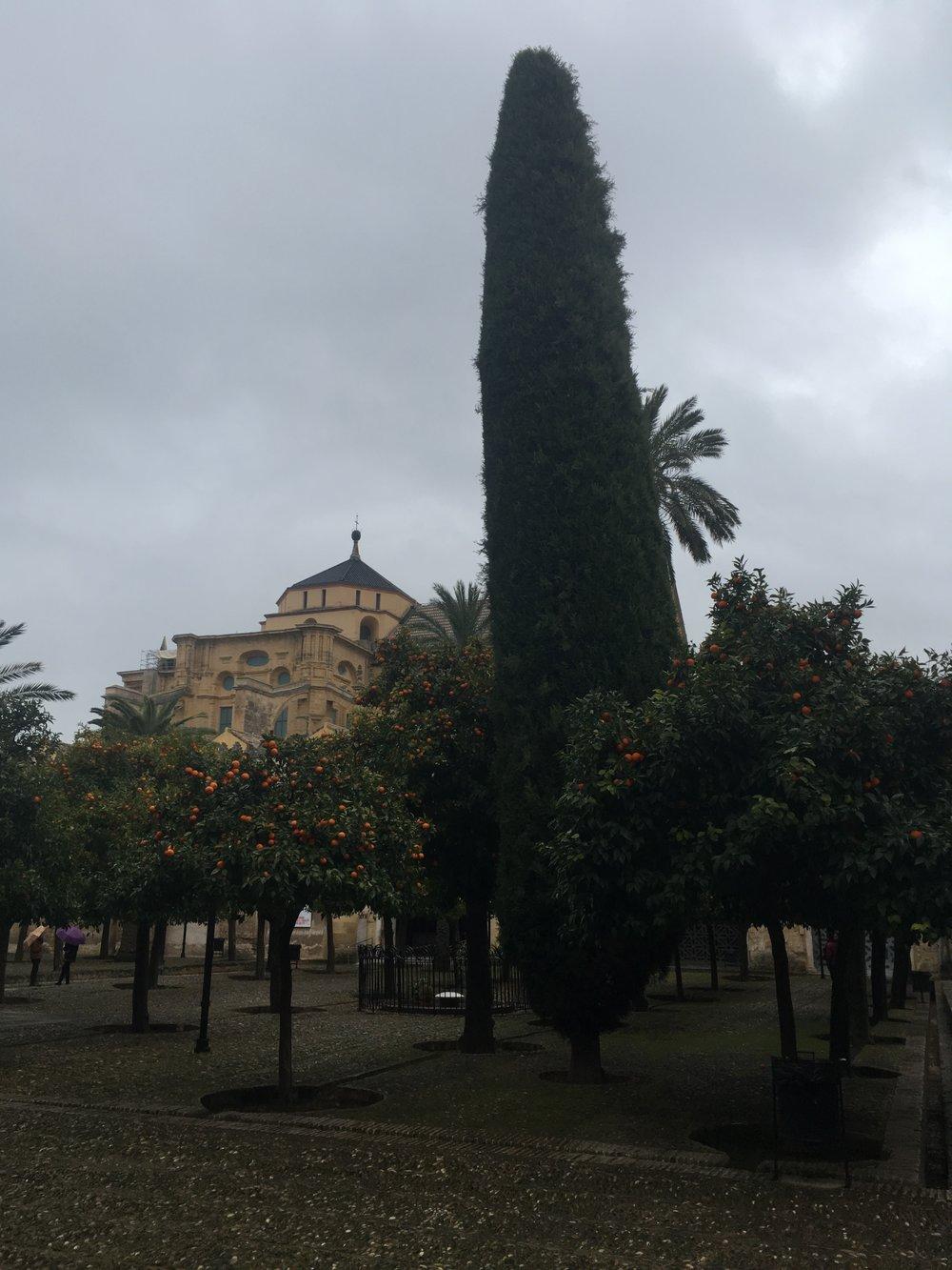 Orange trees in Córdoba