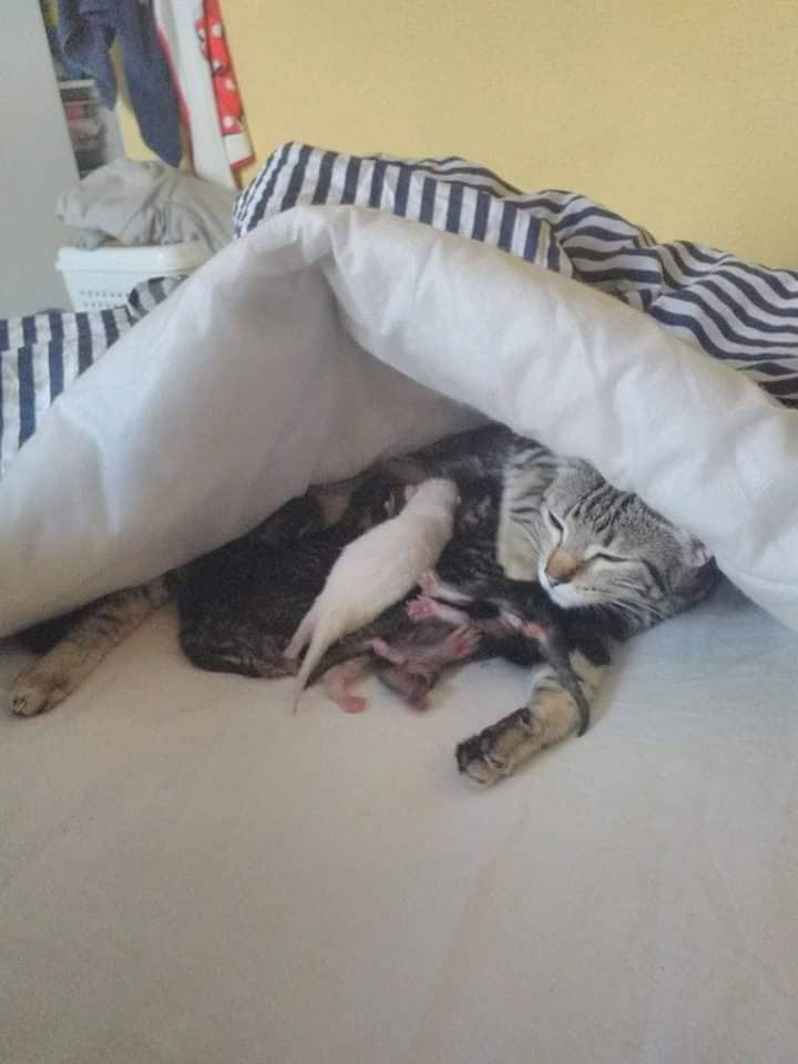 mama cat and kittens