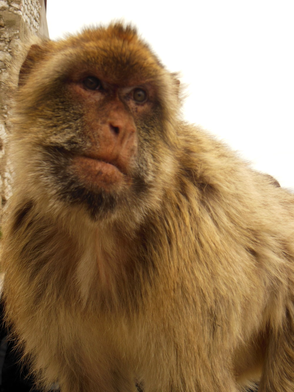 As adorable as they look, BEWARE the monkeys! They are notorious pick-pockets and food thieves!